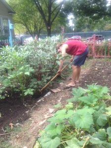 Weeding out the okra bed